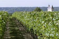Amazing Gardens & Wines of Chinon and Bourgueil